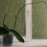 Ilgiausia orchidėja